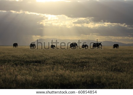 Elephant family crossing grassland plain - stock photo