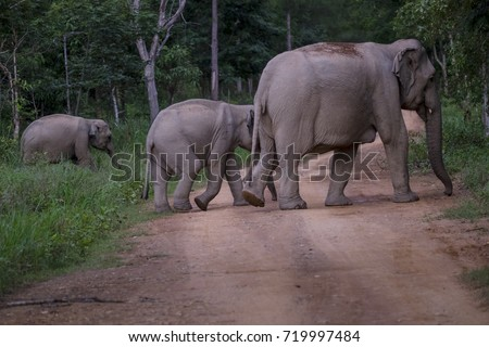 Elephant family in national park of Thailand