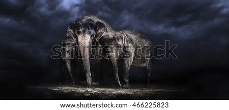 Elephant family. storm in the savannah