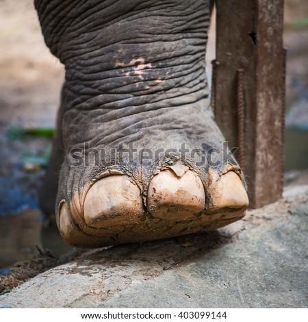 Elephant feet at the zoo - stock photo
