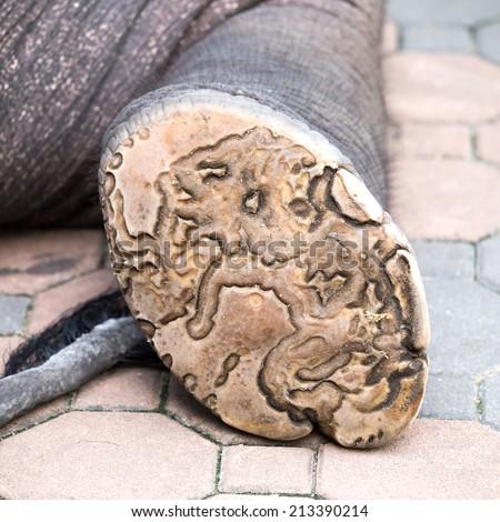 Elephant foot - stock photo