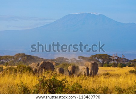 Elephant group in front of Kilimanjaro - stock photo