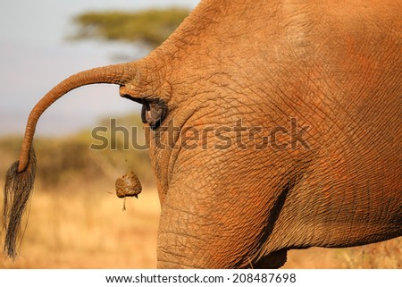 Poo Stock Photos Images Amp Pictures Shutterstock