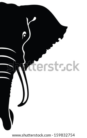Elephant head.  - stock photo