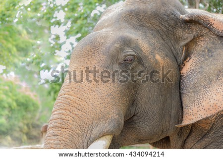 elephant head close up with rought skin surface - stock photo