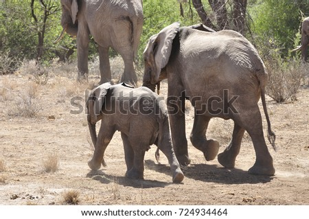 Elephant herd during drought
