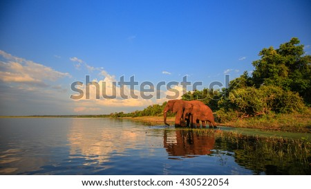 Elephant herd with baby coming to drink at river, Kruger National Park - stock photo