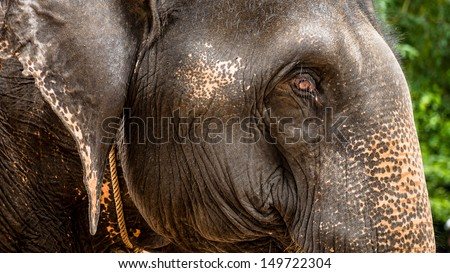 Elephant in Angkor Wat, Cambodia - stock photo