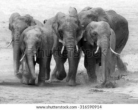 Elephant in lake. National park of Kenya, Africa - stock photo