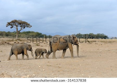 Elephant in National park of Kenya, Africa - stock photo