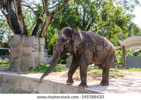 Elephant In National Zoo, Malaysia