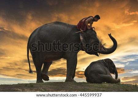 elephant in thailand during sunset silhouetted.