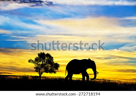 Elephant in the field at dawn - stock photo