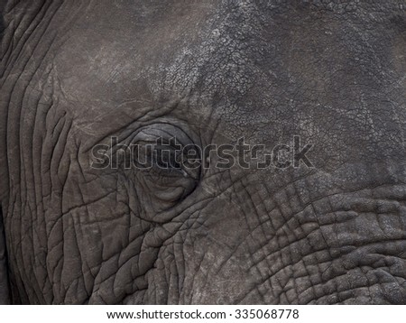 elephant in the Liwonde Malawi park   - stock photo