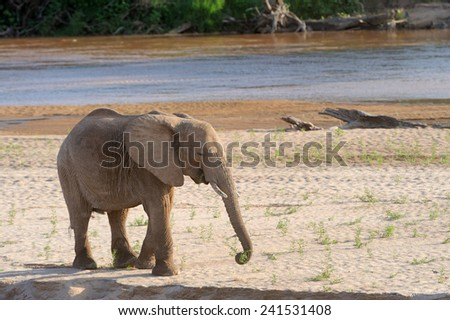 Elephant in the National Reserve of Africa, Kenya - stock photo