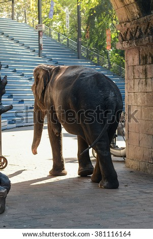 Elephant in zoo, Thailand.
