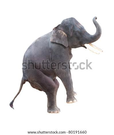 elephant isolated in white - stock photo