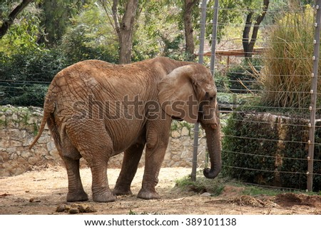 elephant lives in a safari