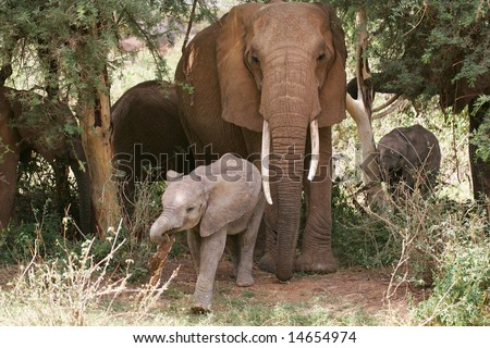 Elephant Mom and baby in the shade - stock photo