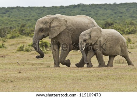 Elephant mother and calf running toward a water hole for a drink - stock photo