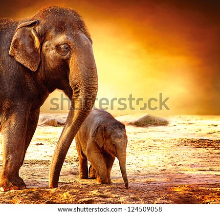 Elephant. Mother with Baby Elephants Walking Outdoors over Sunset - stock photo