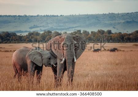 Elephant mother with baby in Masai Mara, Kenya  - stock photo