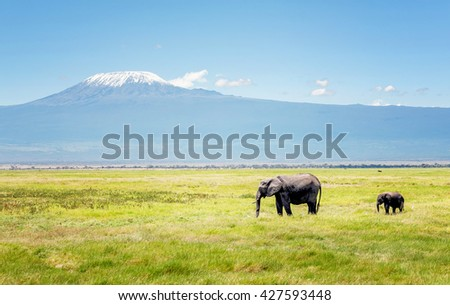 Elephant mother with calf in Kenya, Africa - stock photo