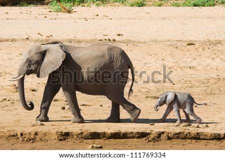 Elephant mother with calf, Samburu, Kenya - stock photo