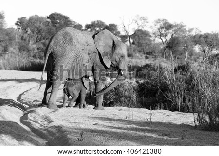 Elephant mother with her calf - stock photo