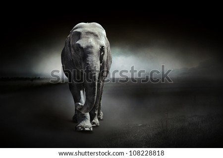 Elephant on a dark background