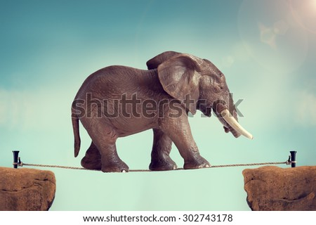 elephant on a tightrope  - stock photo