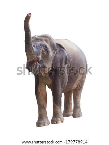 Elephant on a white background - stock photo