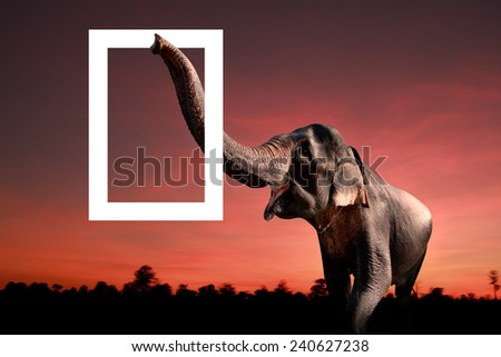 Painted Elephant Background Elephant on Oil Paint