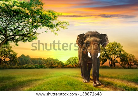 elephant on sunset - stock photo