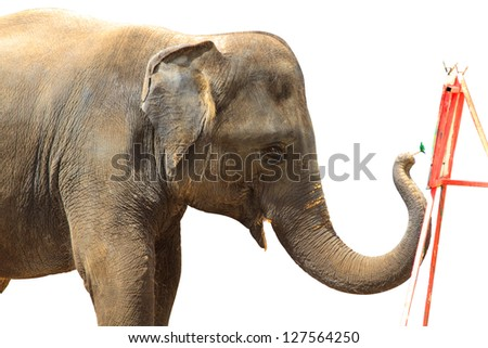 Elephant painting isolated against white background. With Clipping path - stock photo