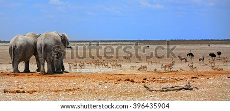 Elephant panorama on the Etosha plains with Zebra & Gemsbok Oryx against a blue cloudless sky - stock photo