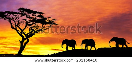 elephant parade down the hill at sunset - stock photo
