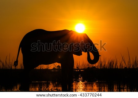 Elephant playing in river at sunrise, South Africa
