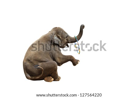 Elephant playing with a ring isolated against white background. With Clipping path - stock photo