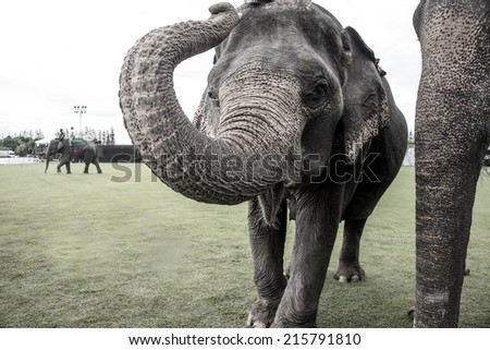 elephant playing with the camera - stock photo