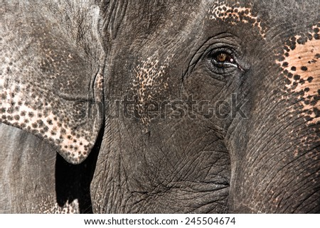 Elephant portrait. - stock photo