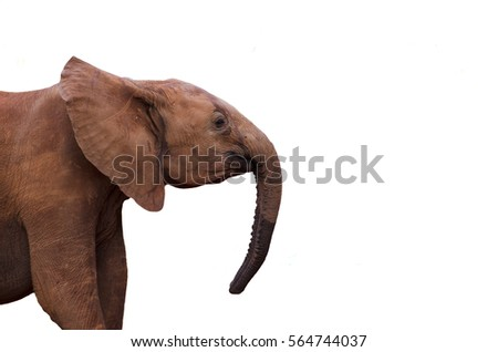 Elephant Profile Stock Images, Royalty-Free Images ...