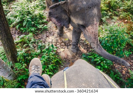 Elephant ride, feet of young woman on the elephant in the wild jungle - stock photo