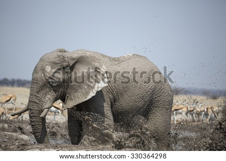Elephant's  Mudbath - stock photo