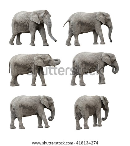 elephant set, clipping paths included