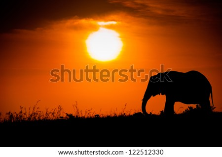 Elephant silhouette against the African sunset - stock photo