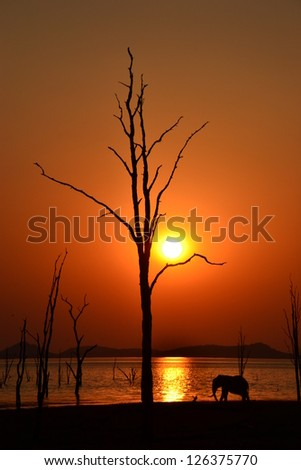 Elephant Silhouette in African Sunset over Lake Kariba Zimbabwe