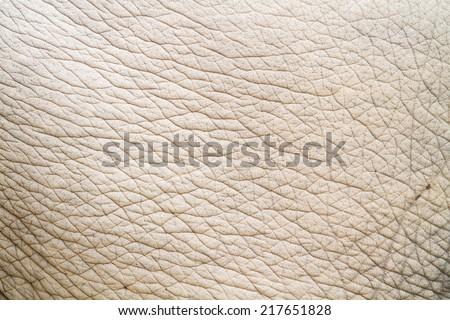elephant skin - stock photo
