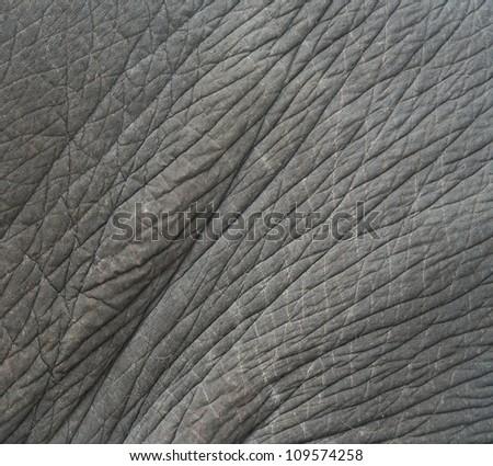 elephant skin textured,Thailand - stock photo