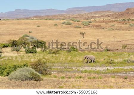 Elephant solitary - stock photo